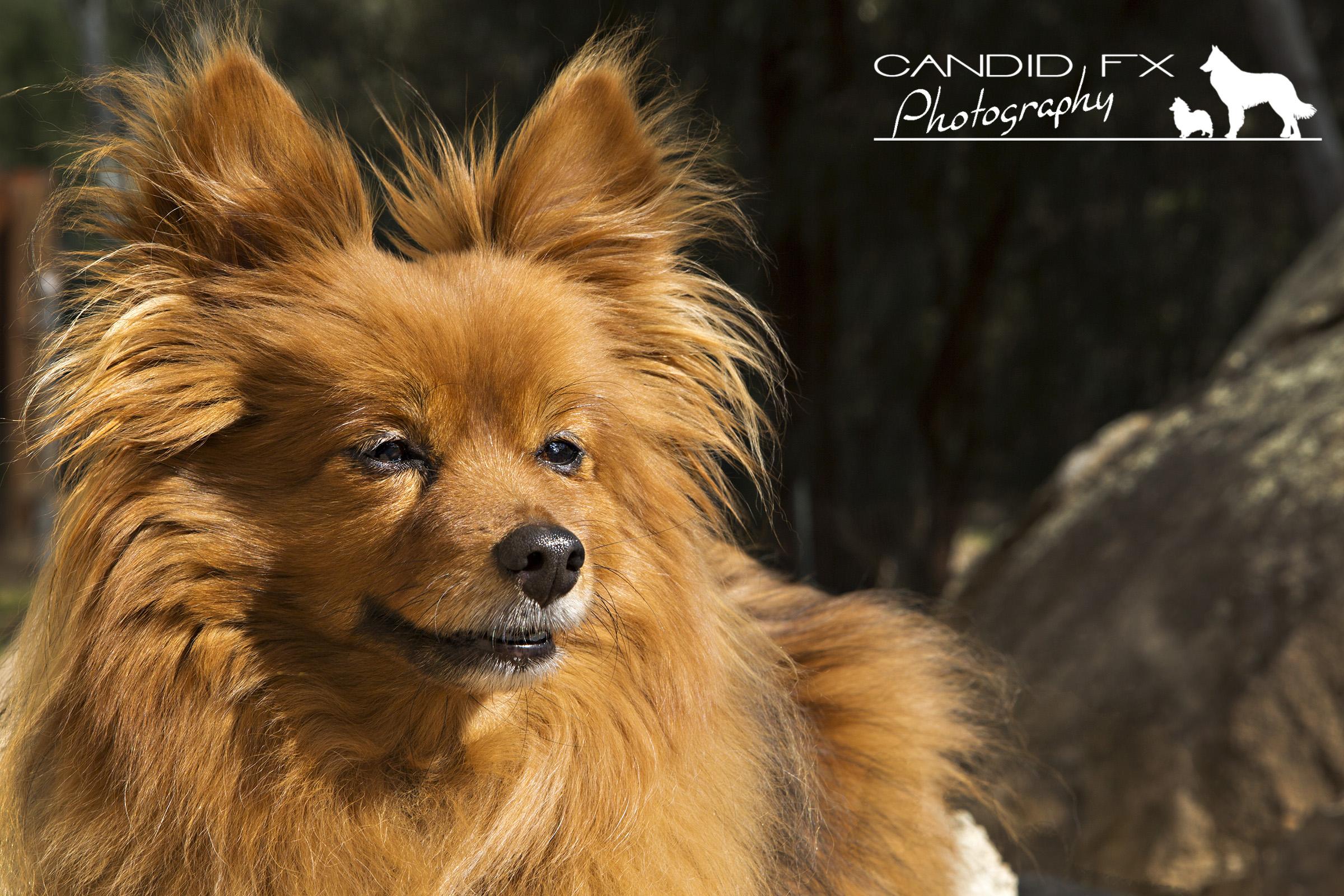 Kiko & Loki Candid FX Photography