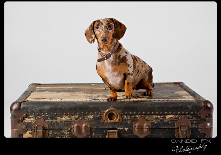 Studio Portrait Session with Tex and Lola