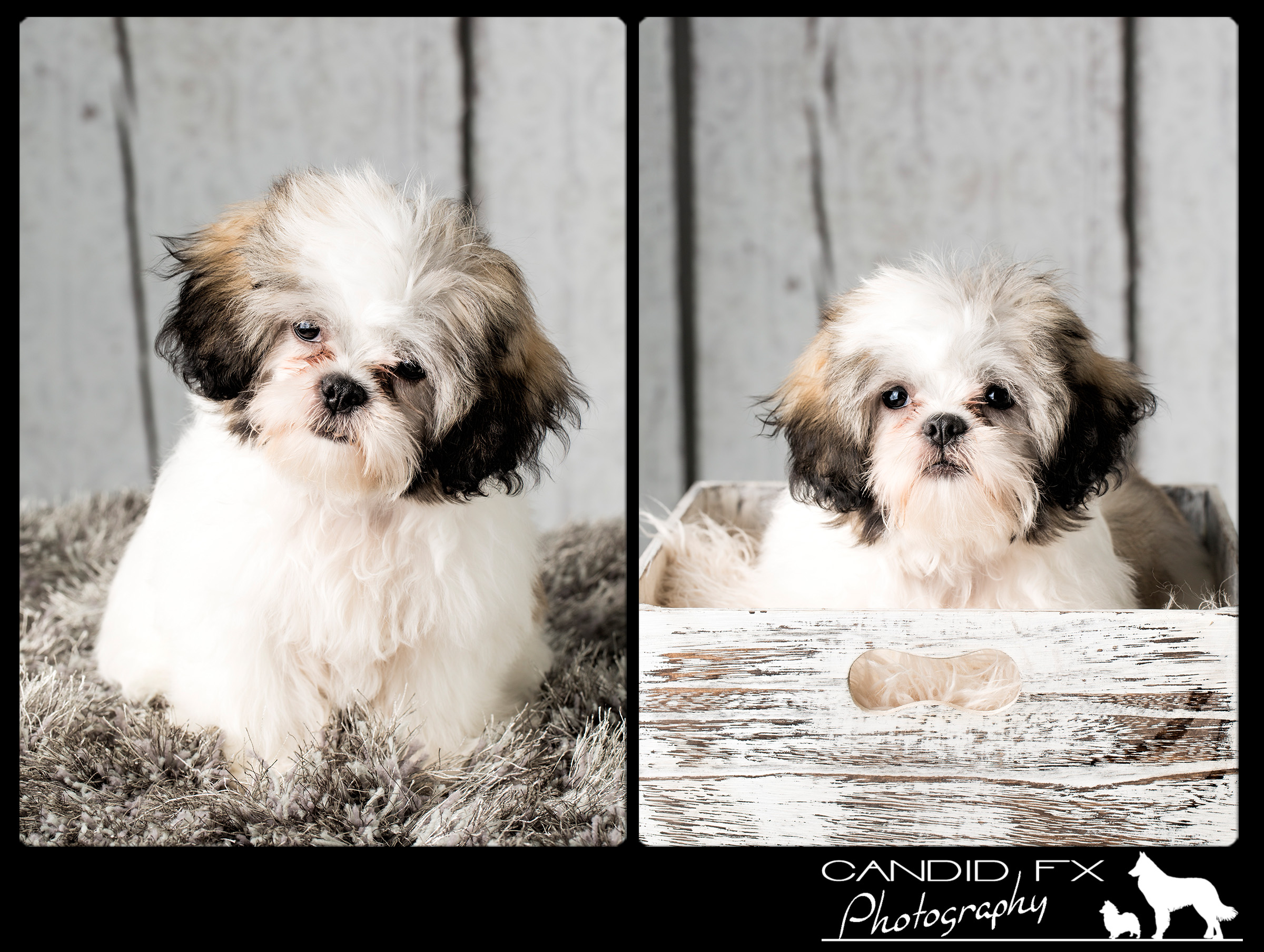 Candid_FX_Photography_Studi_Session_Cookie