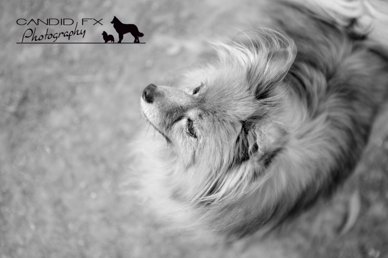 Candid FX Photography - Award Winning Pet Photography