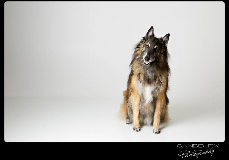 Candid FX Photography - Studio Portrait Session with Loki