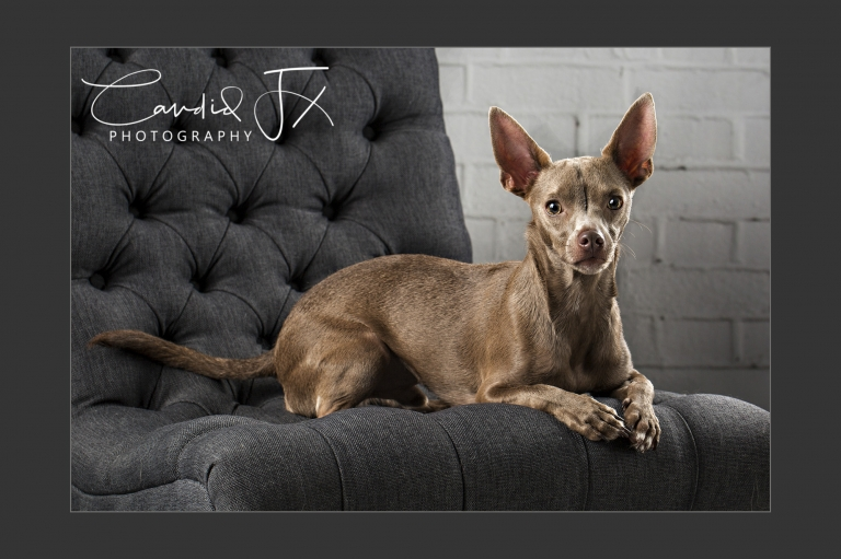 Candid FX Photography Houston